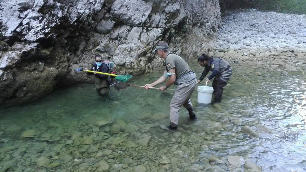 Rescate de peces en el rio Veral